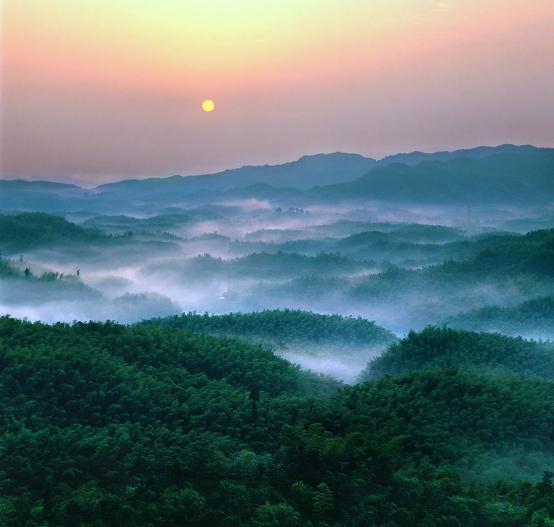 区内地势高峻,空气清新,放眼望去,满目清翠              竹海